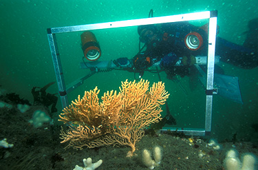 Dive Survey C JNCC
