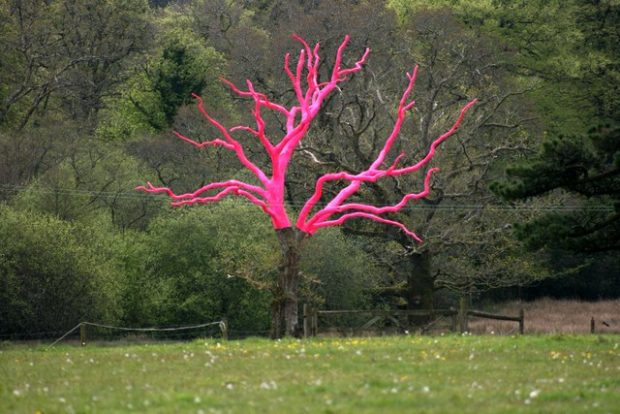 This dead oak tree on the Delamore Estate has had its top part painted pink for the 2012 Delamore Exhibition. The creator is Henry Brudenell-Bruce, who created the Giants Chair near Jays Grave on Dartmoor SX7280 : The Giant's Chair, Natsworthy.