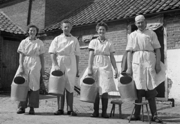 Dairy farming in wartime Norfolk in England